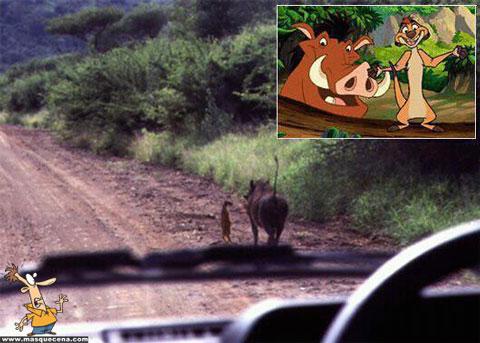 O Timão & Pumba existem na vida real