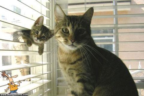 Dois gatos a olhar para o ecrã com um ar de assustados