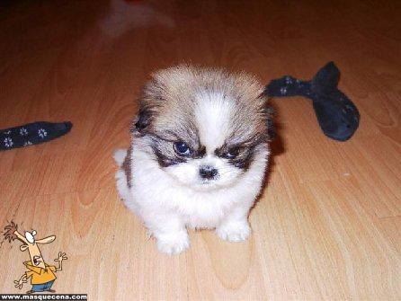 Cãozinho com cara de chateado