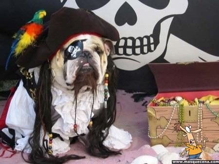 Cãozinho disfarçado de pirata