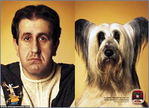 Cães e os seus donos