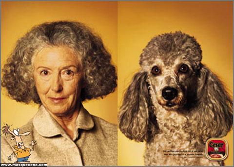 Cães e os seus donos - foto 3