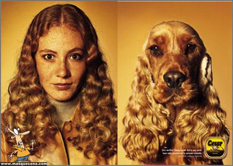 Cães e os seus donos - foto 4