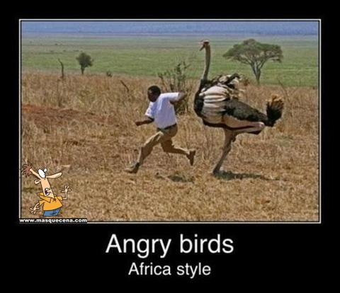 Indivíduo de raça negra a ser perseguido por um avestruz