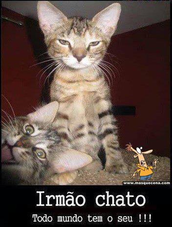 Imagem engraçada de dois gatos. Um destes está a fazer uma careta para a foto