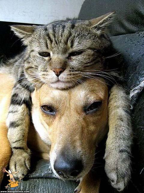 Um gato por cima de um cão. Ambos estão aborrecidos