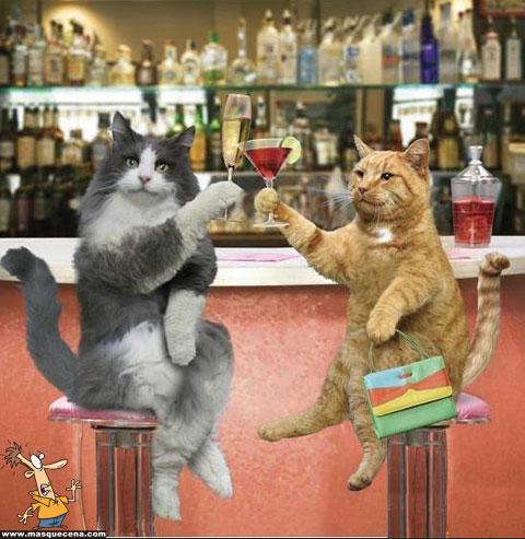 Dois gatos brindando por hoje ser, finalmente, sexta-feira