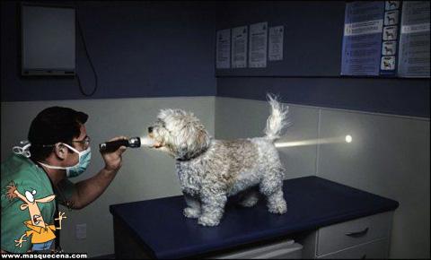 Imagem que mostra um cão a ser examinado pelo veterinário