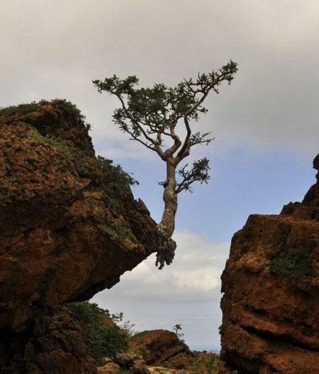Árvore à beira de um rochedo