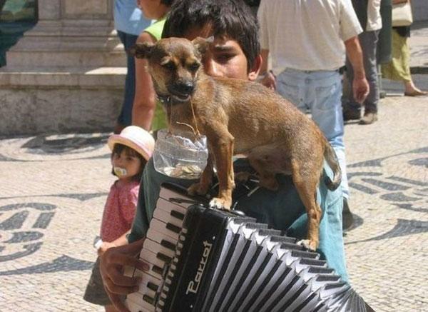 Homem tocando acordeão com o seu cão