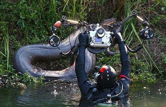 Mergulhador a tirar fotografia de um animal na floresta