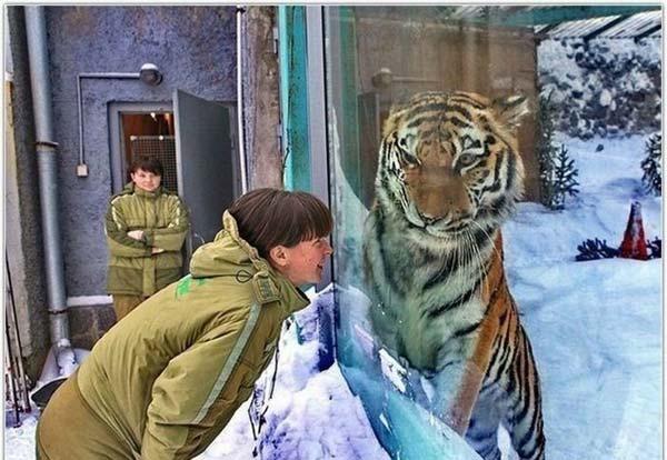 Mulher a aproximar-se de um tigre que está dentro da sua jaula