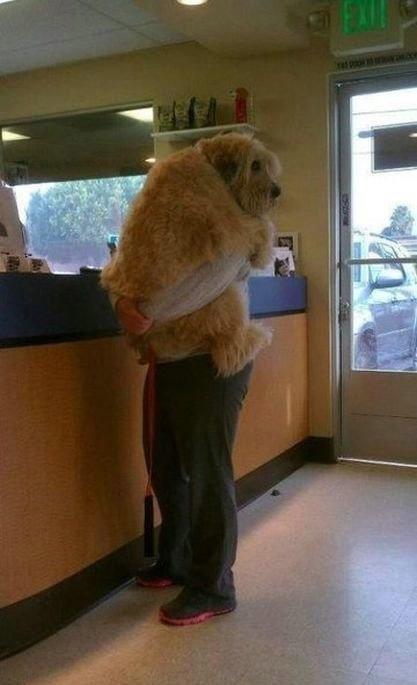 Dono com cão ao colo