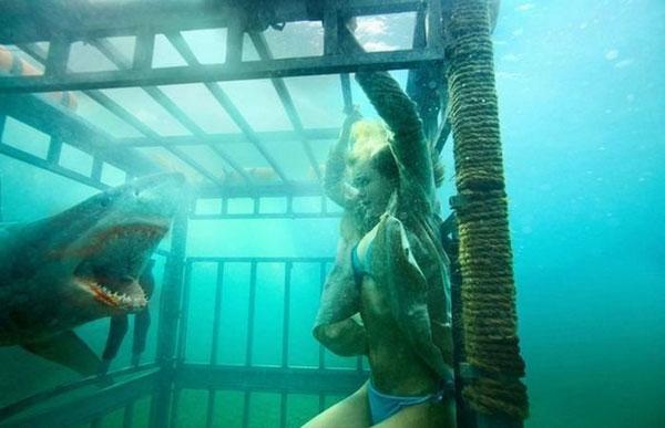 Mulher dentro duma jaula, no mar,  a ser ameaçada por um tubarão.
