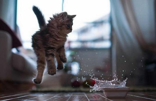 Gato a saltar por causa de água