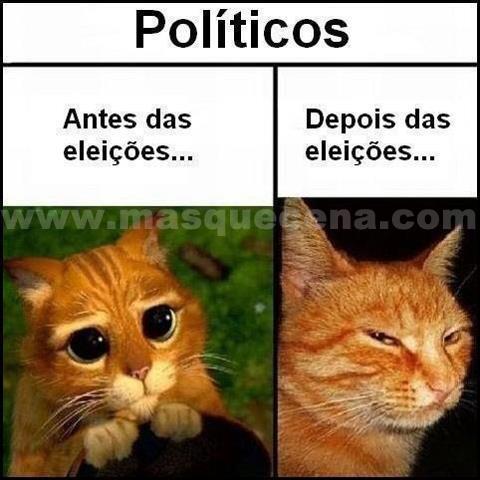 Imagem que mostra, utilizando gatos, como são os políticos antes e depois das eleições