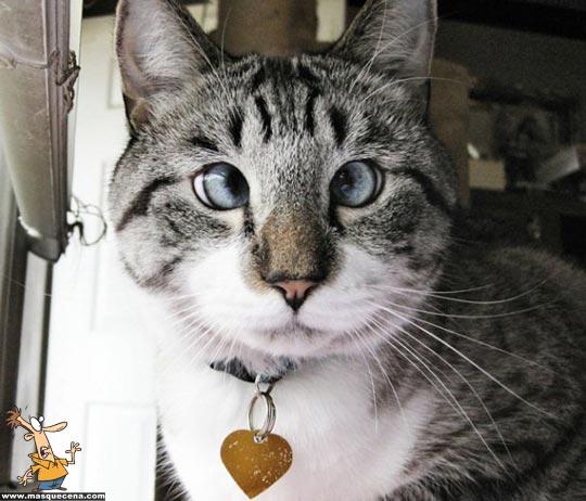 Imagem que apresenta um gato vitima de estrabismo