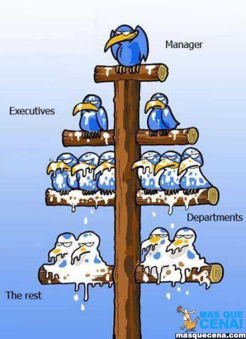 Pássaros dispostos hierarquicamente que mostram a organização de muitas empresas